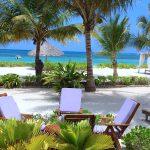 Next Paradise
