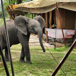 Serian Serengeti Camp