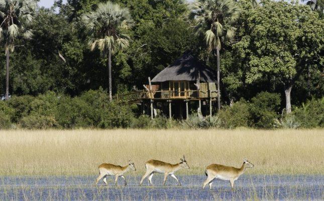 Kwetsani Camp, Jao Concession, Okavango Delta
