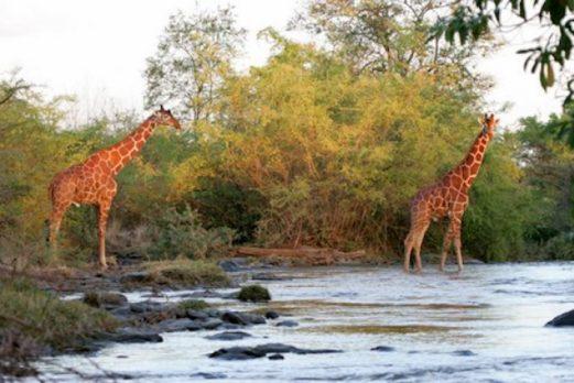 Rhino River Camp