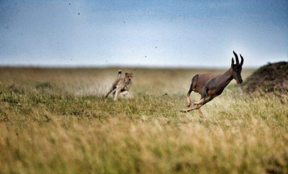 Best Of Kenya: Lewa, Mara, Diani