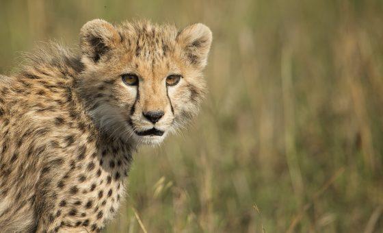 Tanzania : Serengeti & Zanzibar