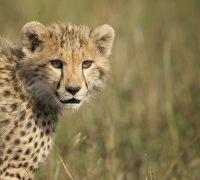 safari tanzania holidays